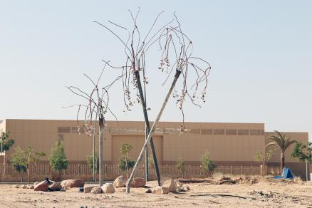Alfia Leiva, Las palmeras del Edén, 2016. Aqaba, Jordania.